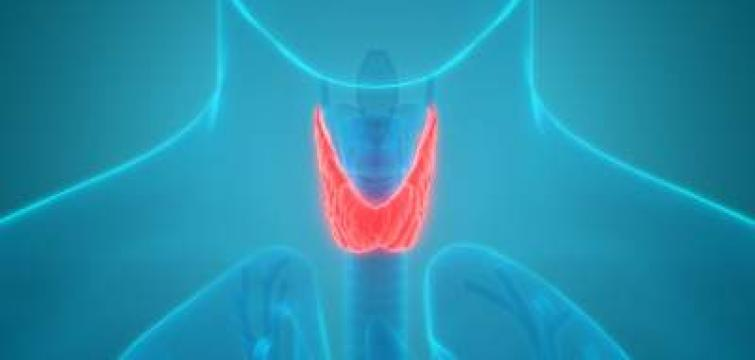 Thyroid function: Hypothyroidism - What happens to the body?