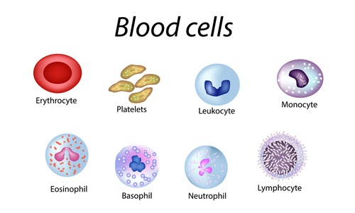 About blood - blood cells