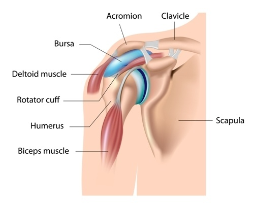 What is bursitis bursa help facilitate the movement of tendons over bony surfaces and are located in many areas of the body inflammation of the bursa is called bursitis ccuart Choice Image