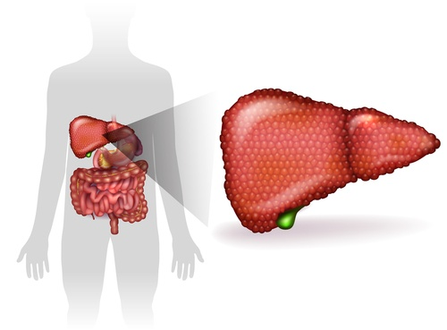 hepatitis liver